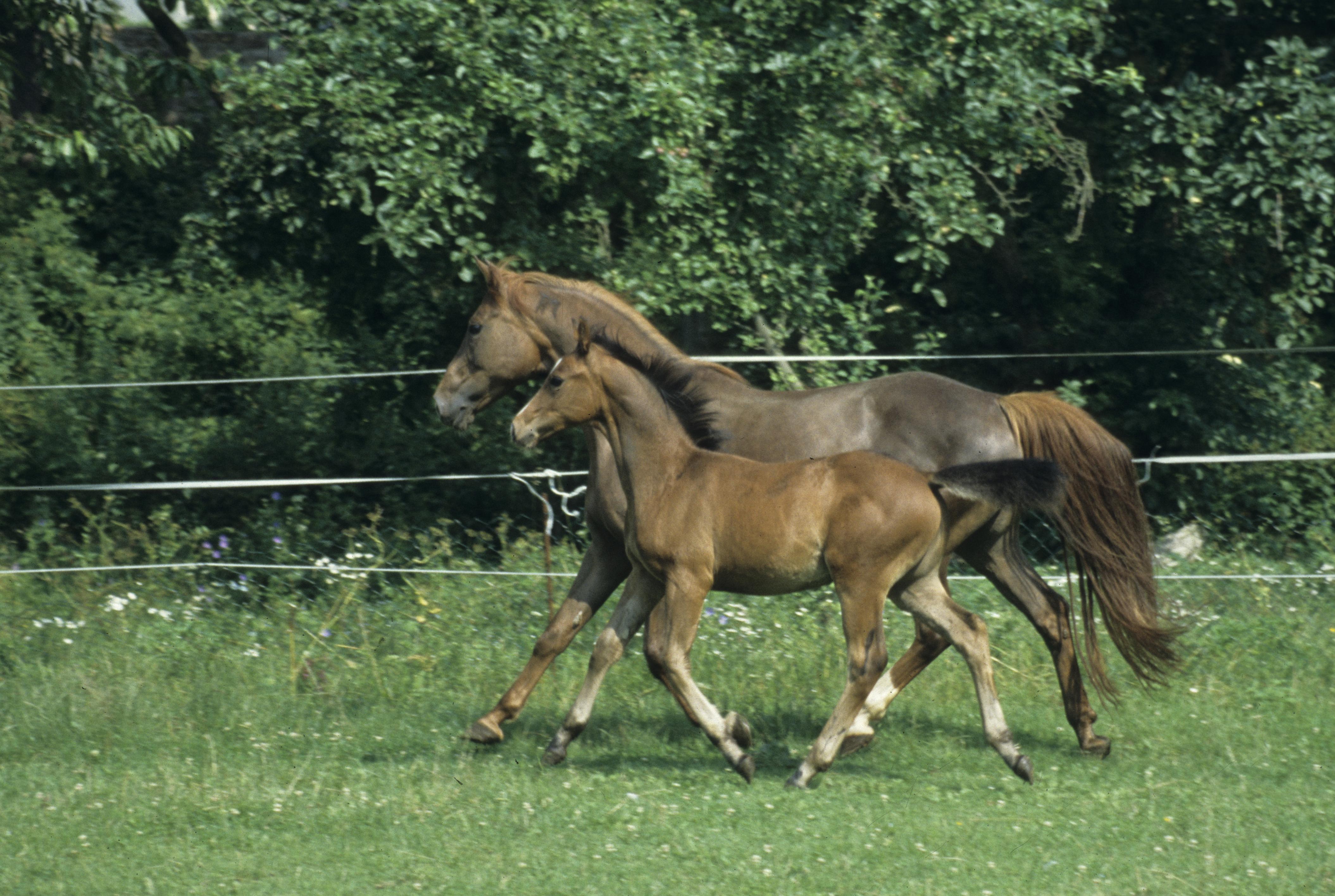 pferd bandagen anlegen